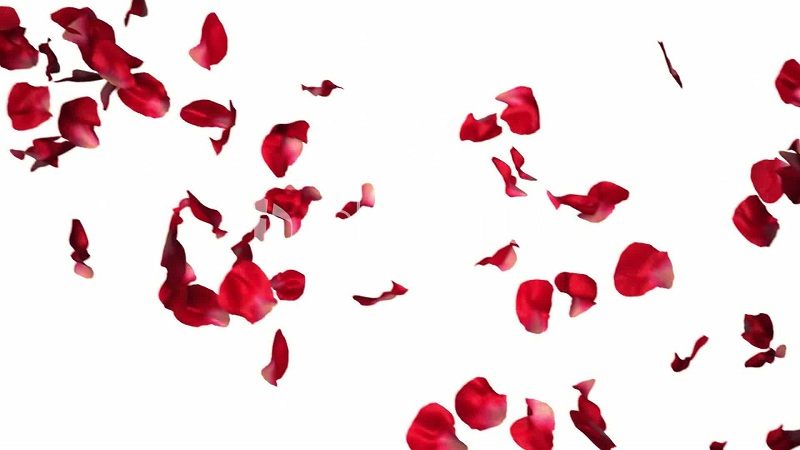 Rose Petals for cracked lips