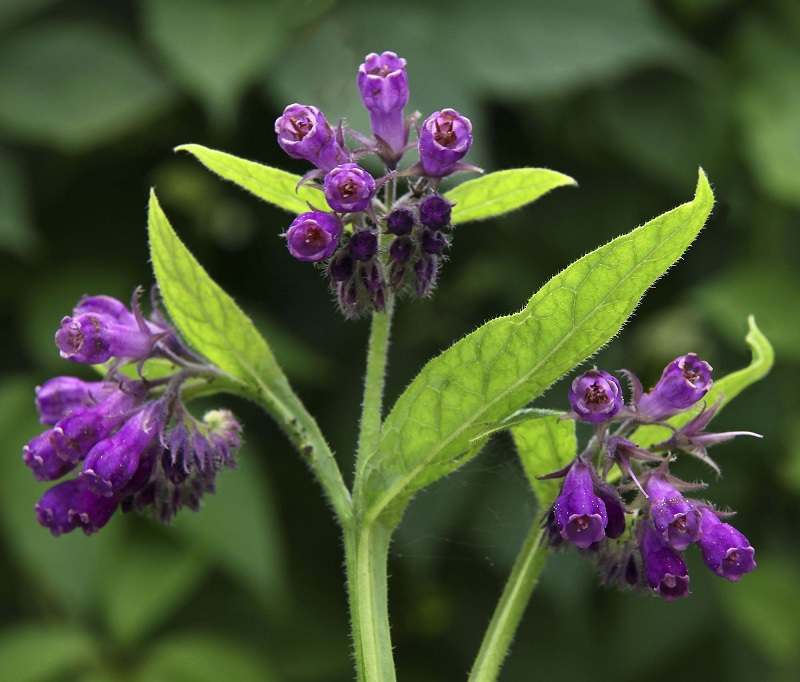 plants for spring allergies